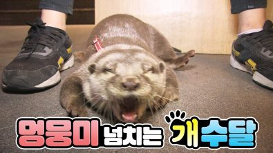 otter-that-acts-like-a-dog