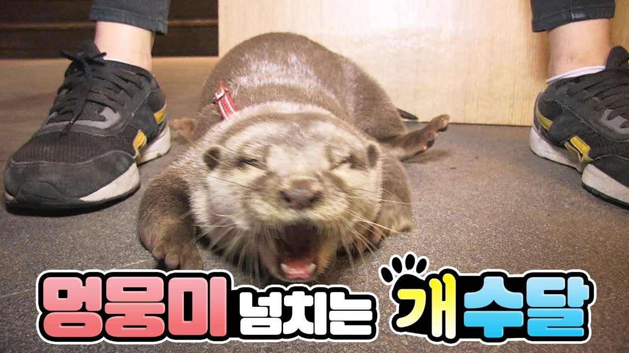 Otter That Acts Like A Dog