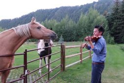 horses-enjoy-violin-playing