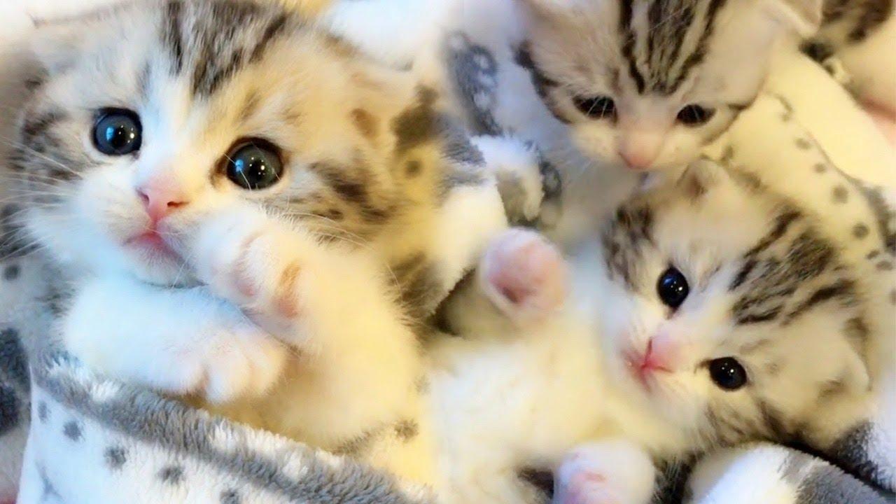 Purrfectly Beautiful Kittens