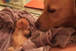 sleepy-kitten-greeting-dog-friend