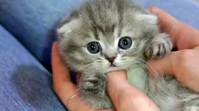 cute-kittens-to-brighten-your-day
