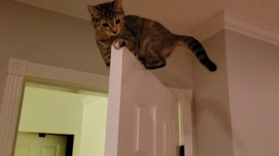 an-a-door-able-kitten-perched-on-top-of-a-door