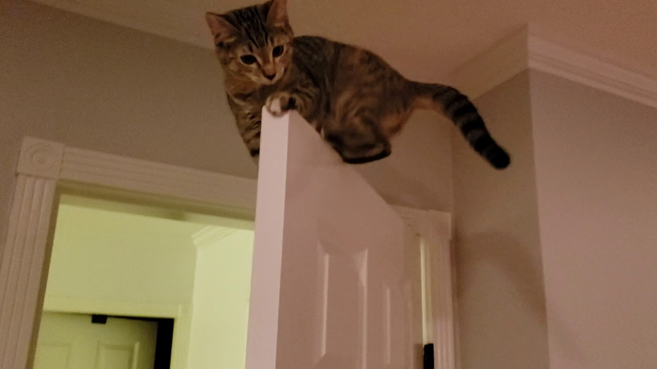 An A-Door-Able Kitten Perched On Top Of A Door