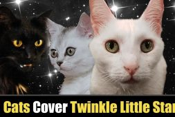 cats-singing-twinkle-twinkle-little-star