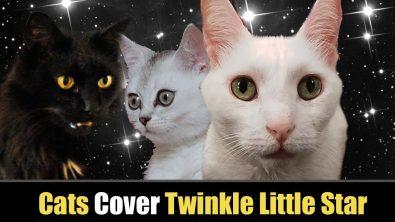 cats-singing-twinkle-twinkle-little-star