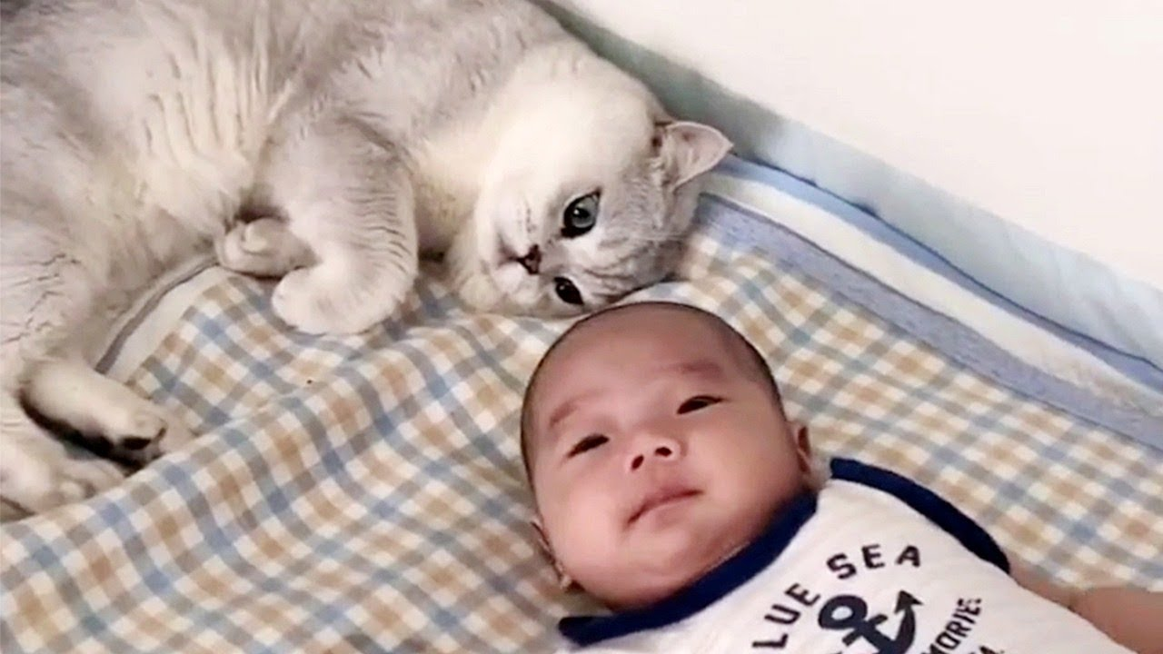 Cat Loves His New Baby Human