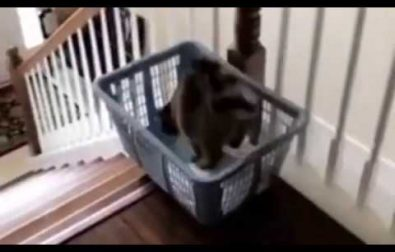 sometimes-kitty-wants-a-faster-way-down-the-stairs