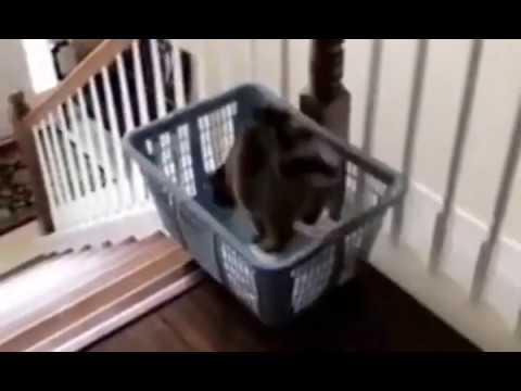 Sometimes Kitty Wants A Faster Way Down The Stairs