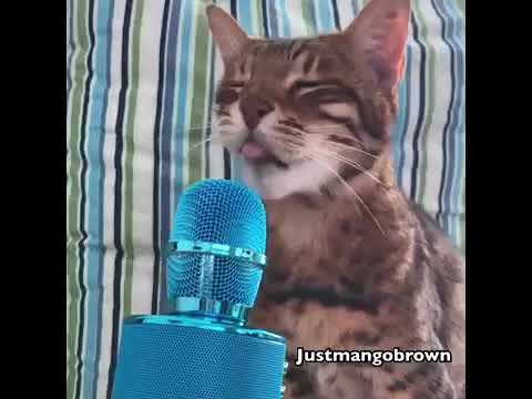 And Now A Word From Our Sponsor - MEOW!