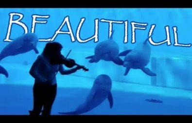 animals-enjoying-music-some-singing-and-dancing-along