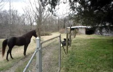 horse-and-dog-playing-together