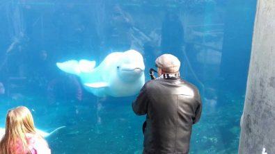 beluga-whale-dancing-to-saxophone-music