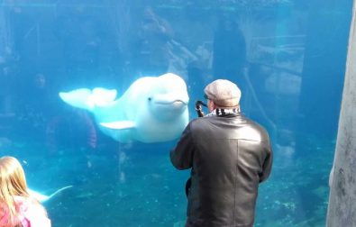 beluga-whale-dancing-to-saxophone-music