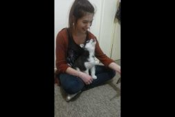 adorable-siberian-husky-puppy-howls-along-with-a-video