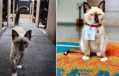 cat-goes-from-being-a-stray-to-a-lawyer