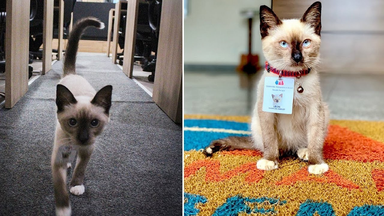 Cat Goes From Being A Stray To A Lawyer!