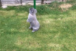 bunnies-running-jumping-and-having-fun