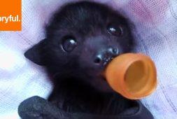 baby-bat-enjoying-a-pacifier-and-massage
