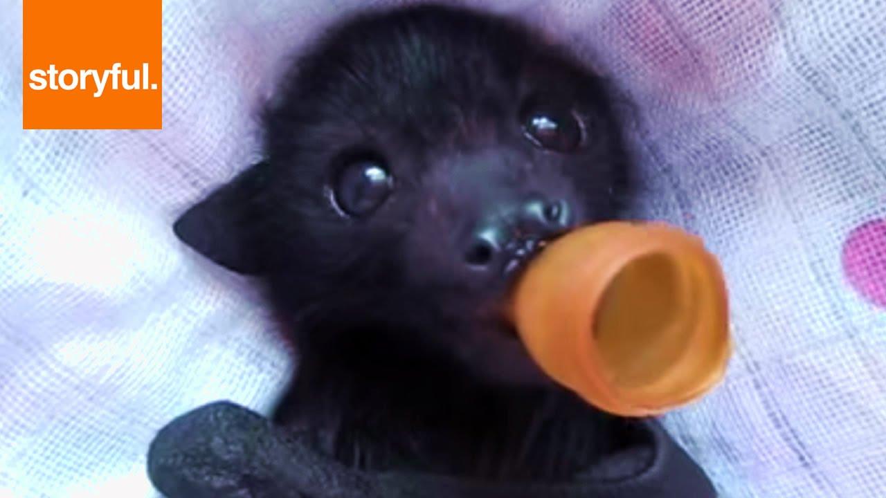Baby Bat Enjoying A Pacifier And Massage