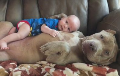 dog-loves-human-baby-like-her-own-puppy