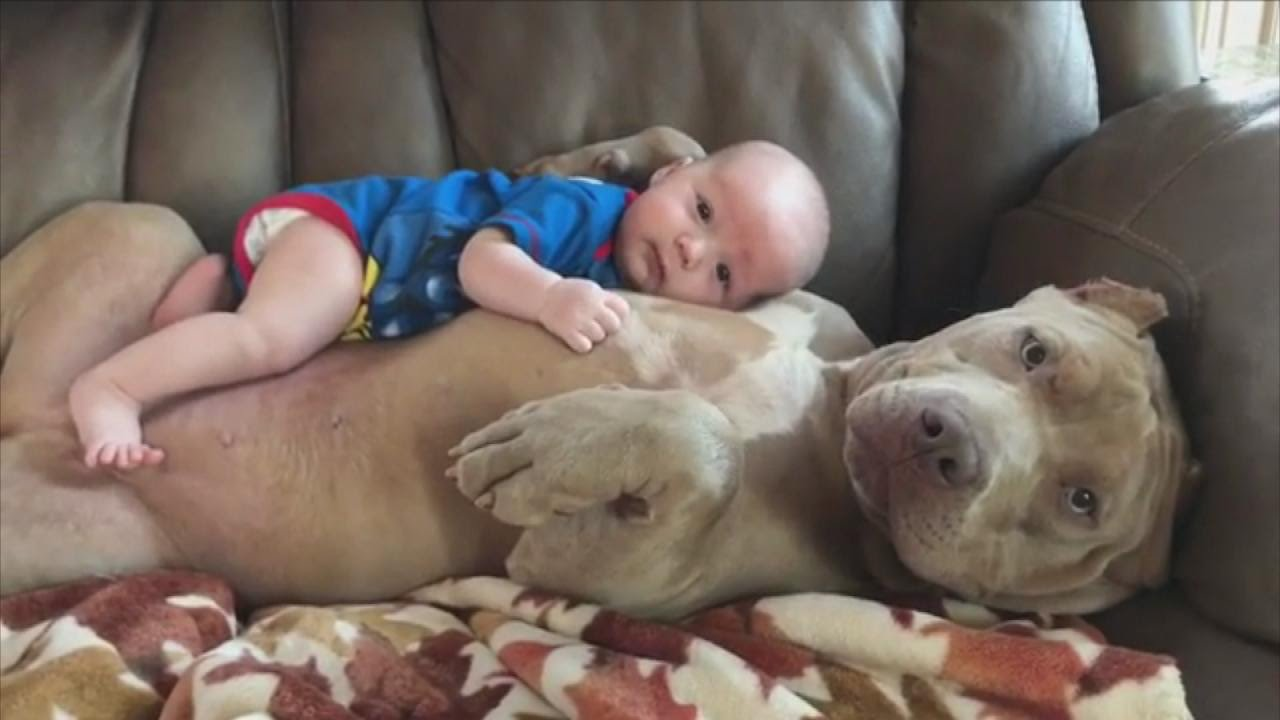 Dog Loves Human Baby Like Her Own Puppy