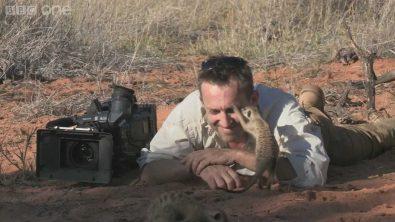 meerkat-uses-nature-cameramans-head-as-a-perch