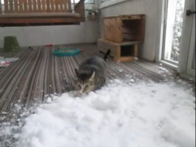 cat-gets-snow-brought-indoors-to-enjoy