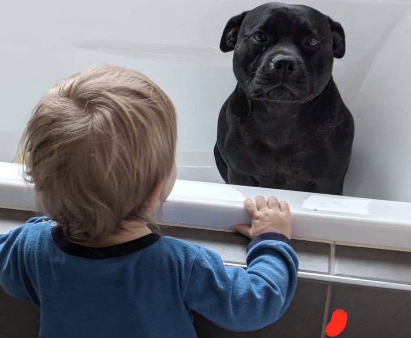 dog-loves-bathtime-with-neighbors-children-each-night