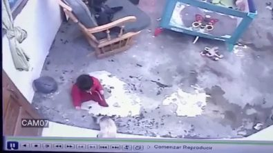 mother-cat-saves-human-toddler-from-fall