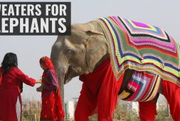 elephants-get-some-winter-sweaters