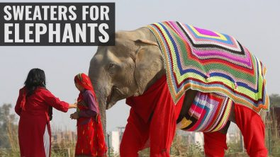 elephants-get-some-winter-sweaters