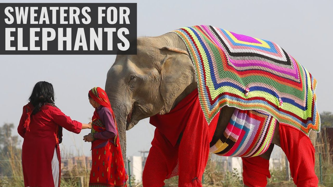 Elephants Get Some Winter Sweaters
