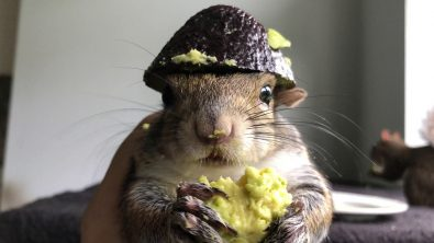 seymour-the-squirrel-loves-avocado