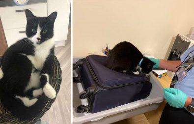 couple-stopped-at-airport-because-their-cat-snuck-into-their-luggage