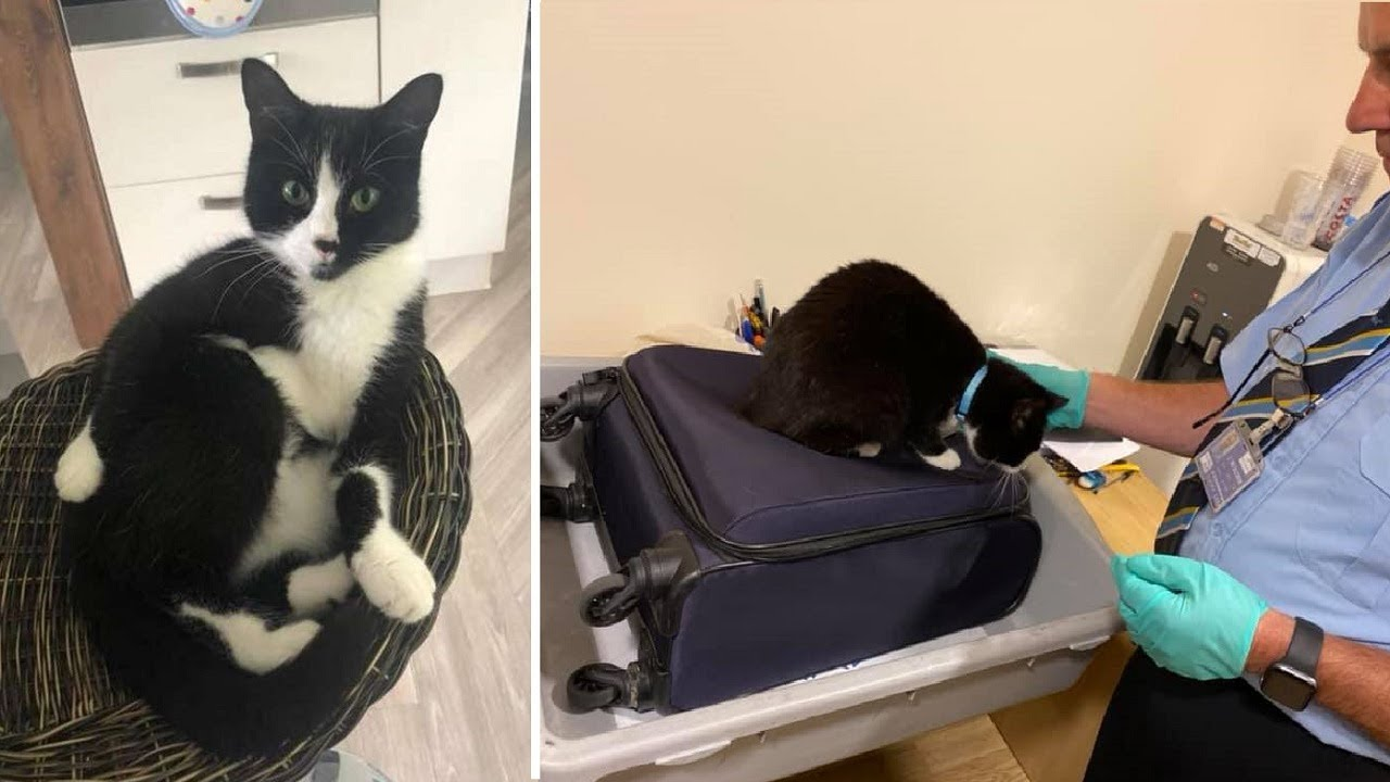 Couple Stopped At Airport Because Their Cat Snuck Into Their Luggage