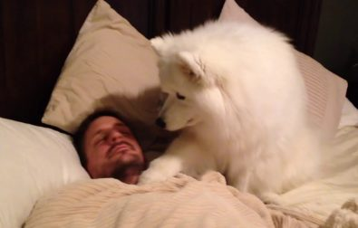 sweet-dog-gently-waking-up-her-human-daddy