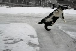 cats-and-dogs-playing-while-sliding-on-ice