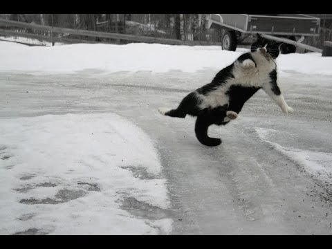 Cats And Dogs Playing While Sliding On Ice
