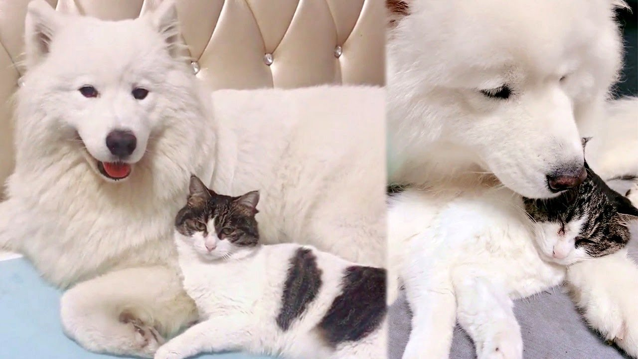 Cloud Dog And Cat Are Best Friends