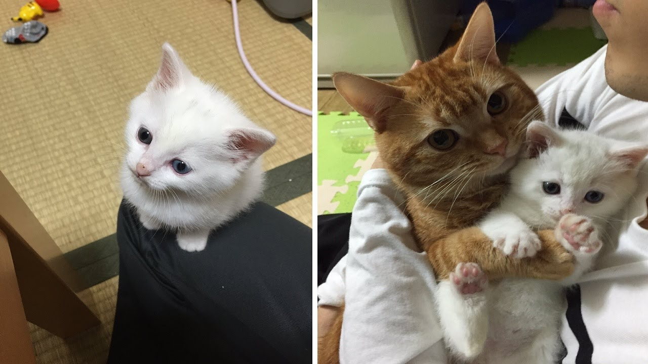Cats And Humans Alike Want To Hug This Adorable Kitten