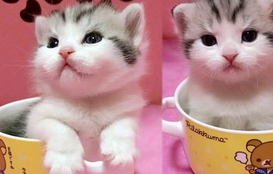 cup-of-cuteness