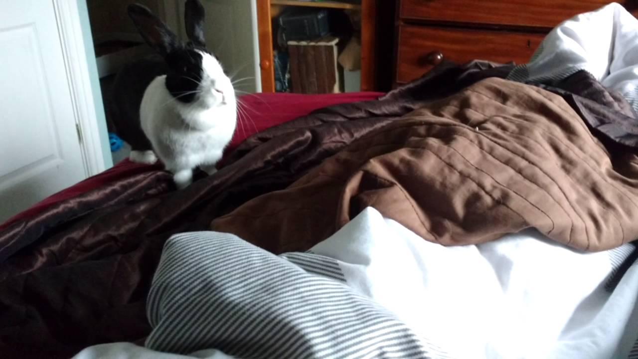 Happy Rabbit Makes Cute Honking Noises