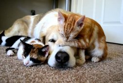 just-a-dog-resting-with-his-best-friends-kittens