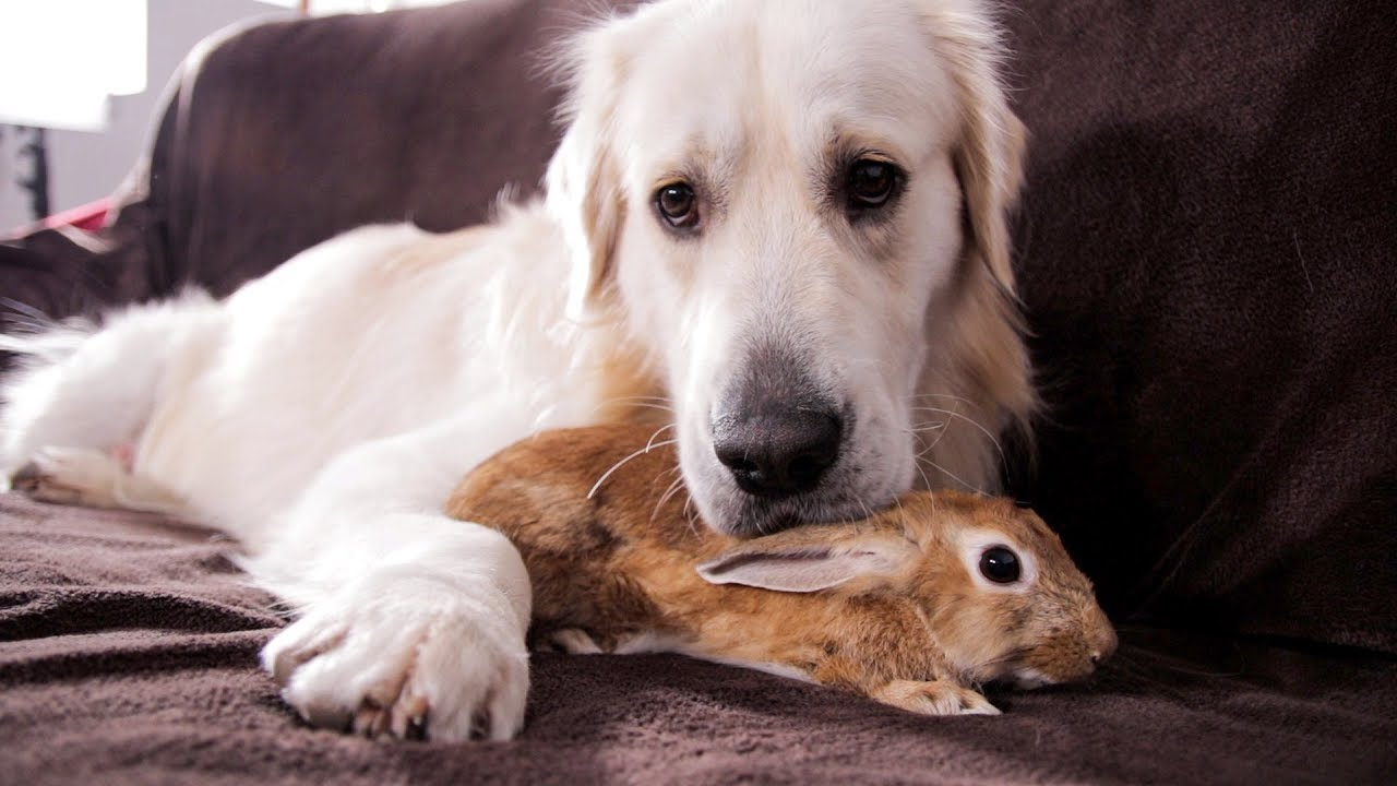 Dog And Rabbit Are Best Friends