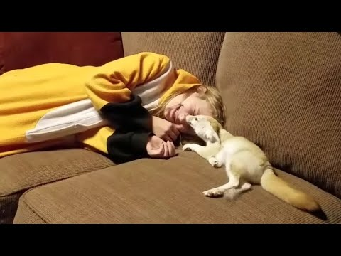 Adorable Fennec Fox With Her Favorite Human