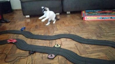 kitten-has-adorable-reaction-to-slot-car
