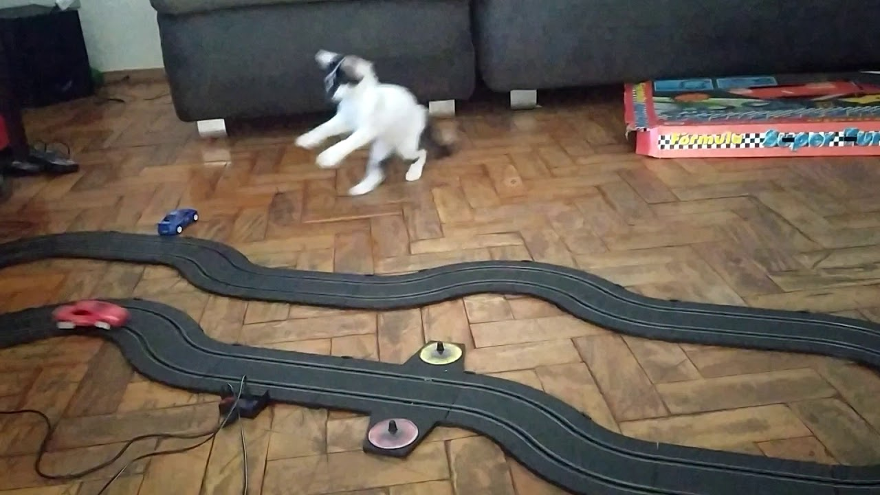 Kitten Has Adorable Reaction To Slot Car