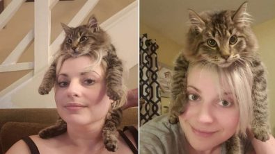 this-cat-decided-to-become-a-hat