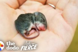 sweet-story-of-a-tiny-mouse-rescued-and-enjoying-life